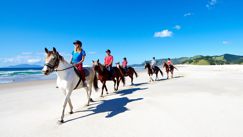horse riding pakiri beach, house riding, wine tasting, cheese tasting, Ride Horses at the Beach & Taste Great Wine