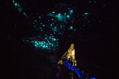 Waitomo Glowworms New Zealand Tour