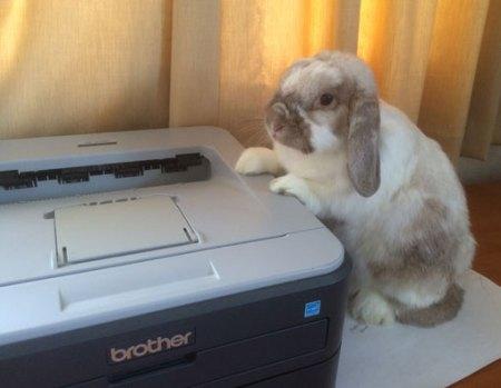 Mick Peck Magic : Magic Rabbit Invoice Picture