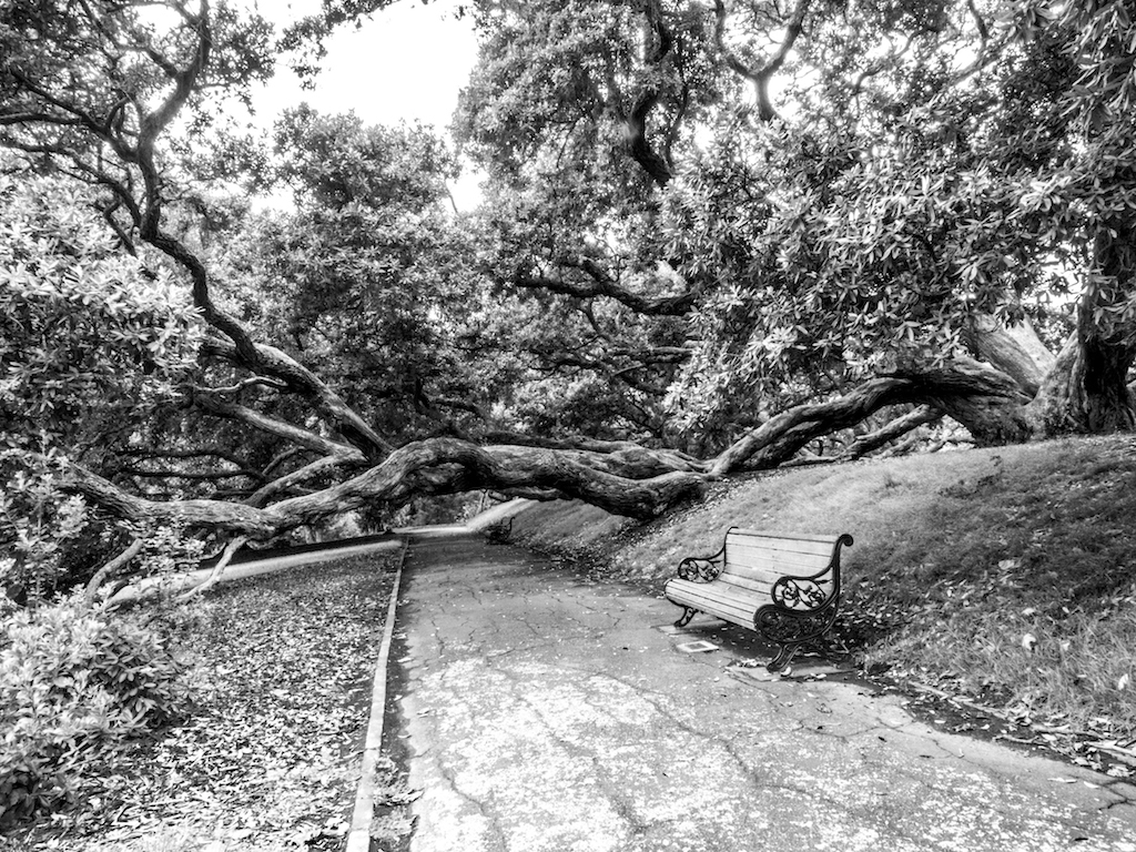 Dove Myer Robinson Park