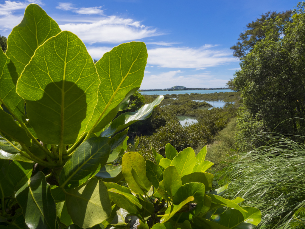 Hobson Bay - Landscape Photography - Auckland