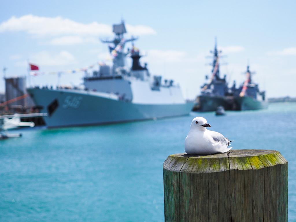Wynyard Quarter Seagull & Navy Ships