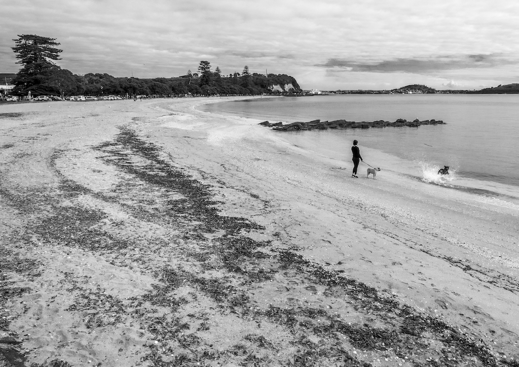 St-Heliers Beach - Black & White