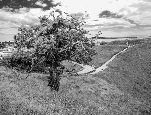 Mount Eden Tree - Black & White