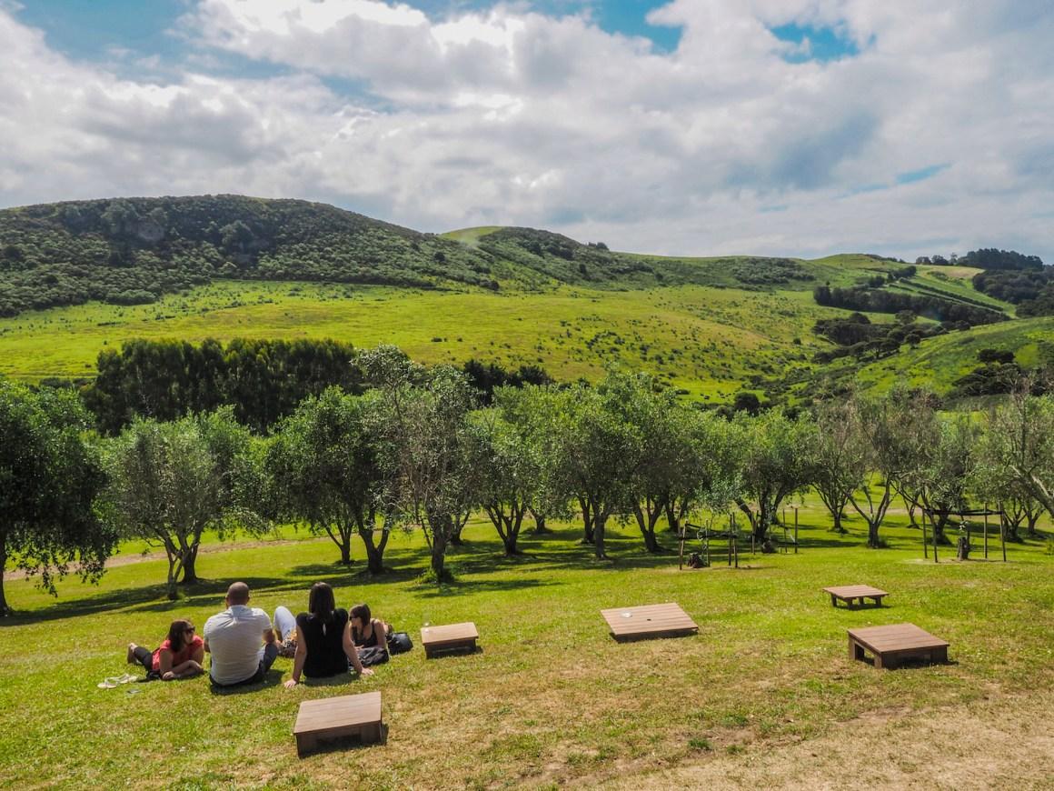 Waiheke Island Vineyard - Landscape Photography Auckland