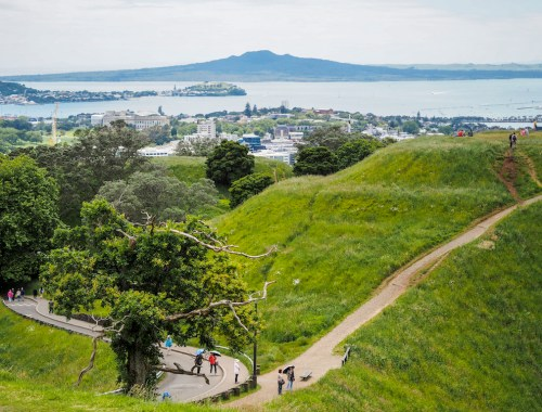 Mt Eden Tree - Street Photography - Auckland