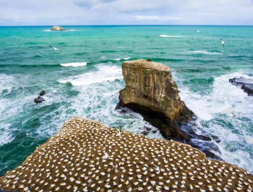 Muriwai Bird Colony - Landscape Photography Auckland