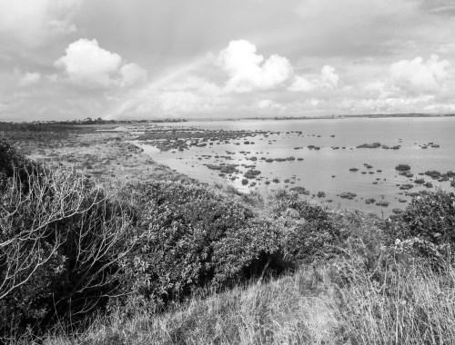 Puhinui Reserve Manurewa