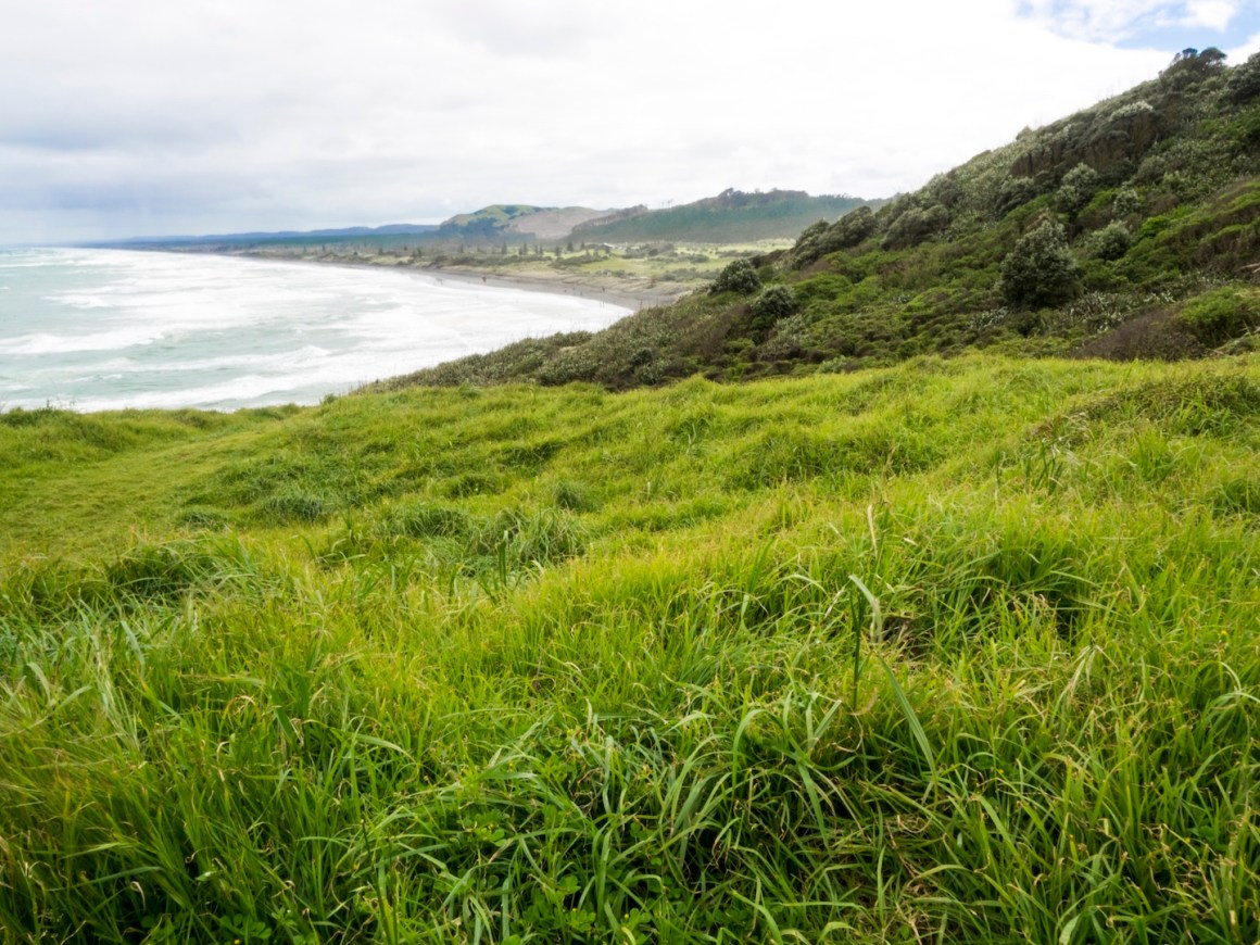 muriwai-green-hills