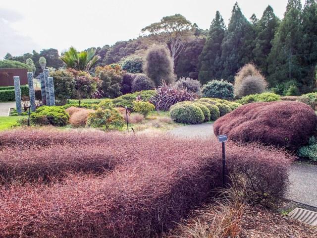 Auckland Botanical Gardens Plants