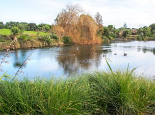 Auckland Botanical Gardens Pond