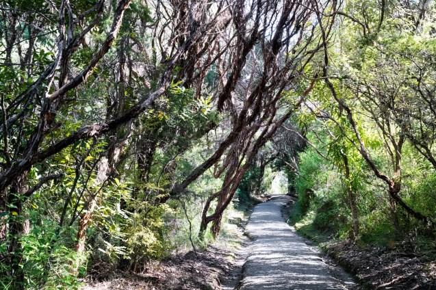 Kaitoke Hot Springs Walk on Aotea Great Barrier Island