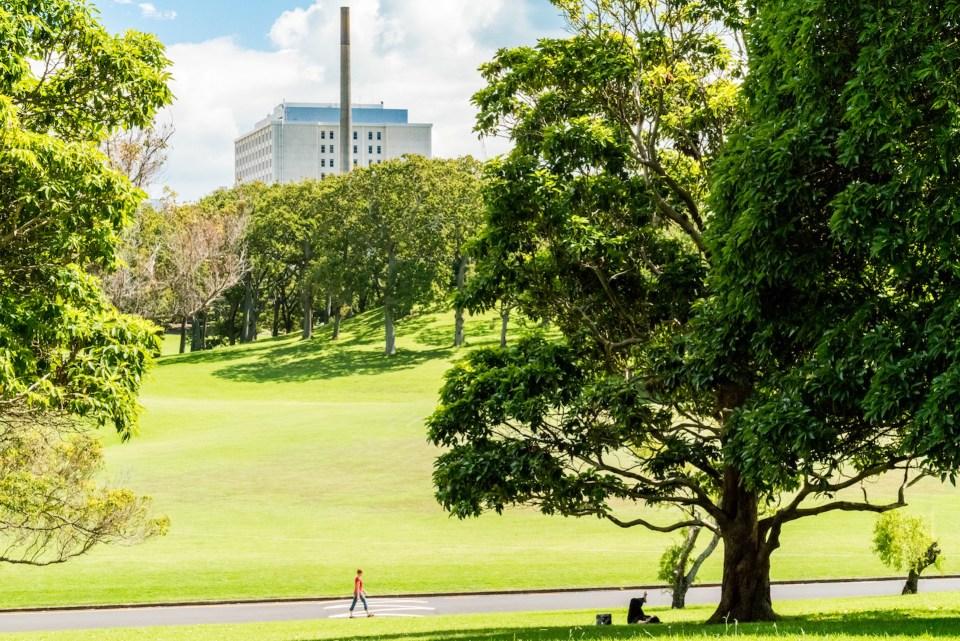 Auckland Domain Park - Street Photography Auckland