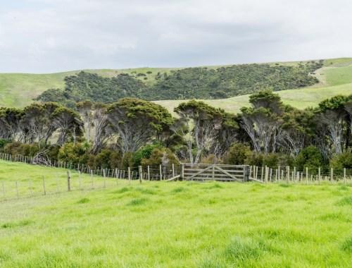 Shakespear Regional Park Bush, Whangaparaoa - Landscape Photography Auckland