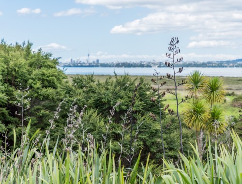 Te Atatu Peninsula City View - Street Photography Auckland