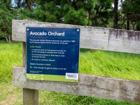 Auckland Public Avocado Orchard Entry Sign