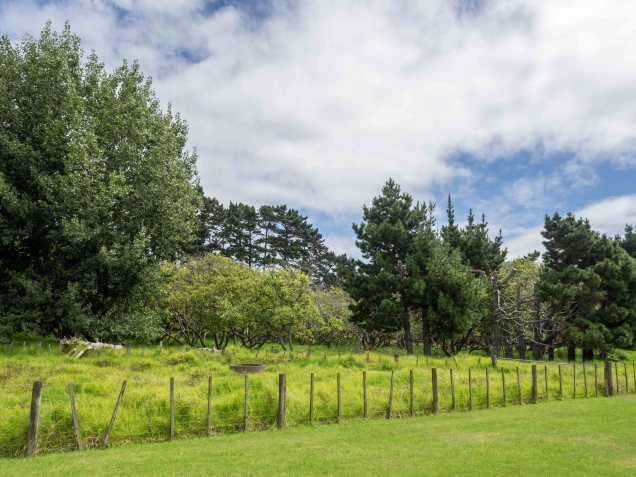 Auckland Public Avocado Orchard Otuataua
