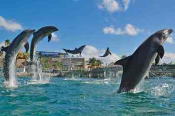 anguilla-dolphins