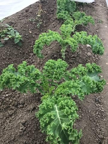 Comment Cuisiner Le Chou Kale : comment, cuisiner, Comment, Cuisiner, Nature