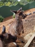 Zoo d'Adélaïde 25
