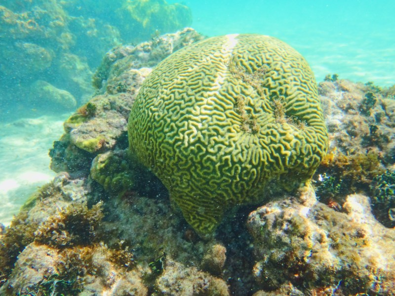Coral in San Andres