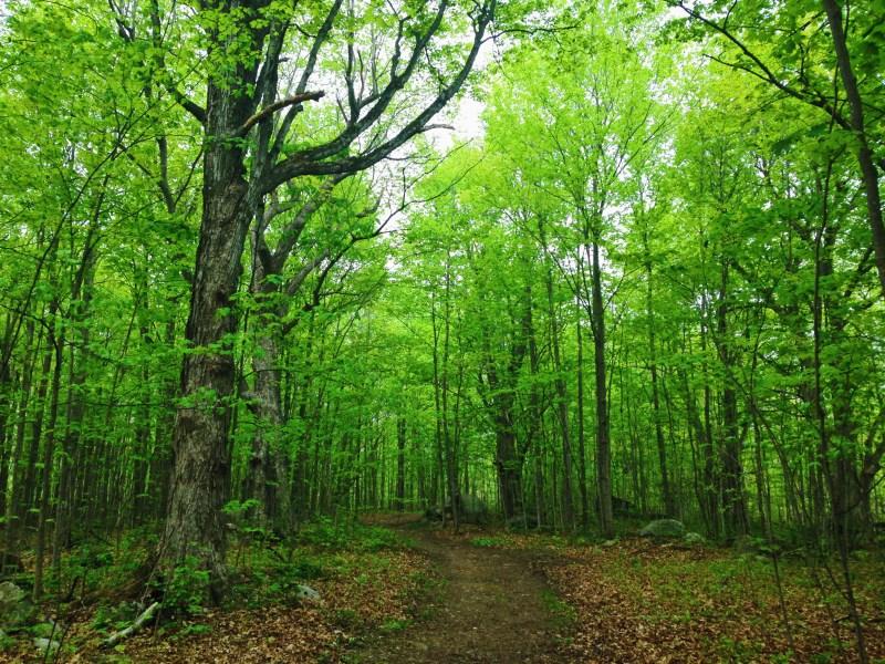 The Garry Fen Trail