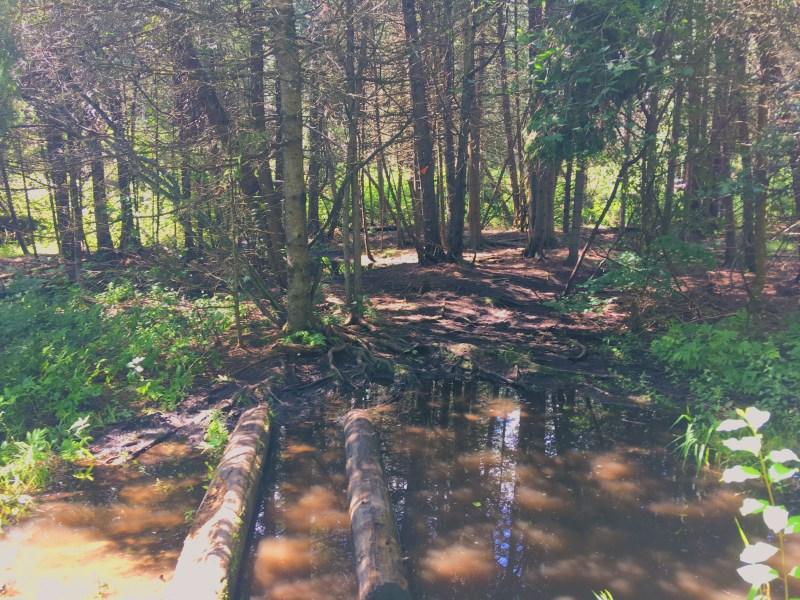 Stony Swamp