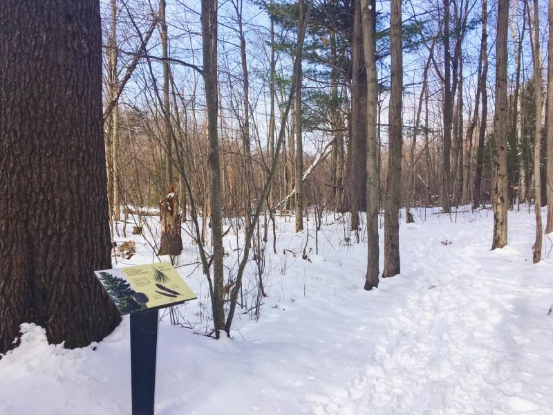Arboretum d'Ottawa