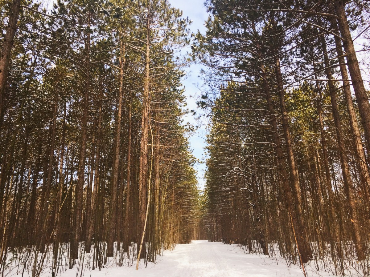 Promenade dans la Pinède d'Ottawa