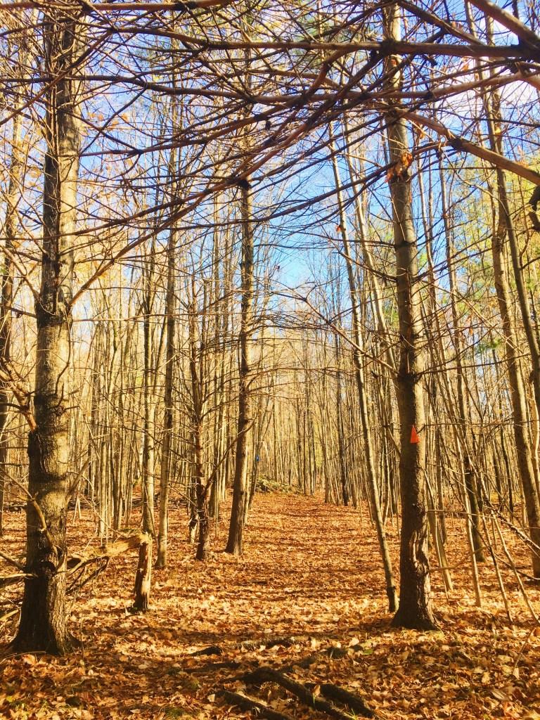 Parc provincial Frontenac