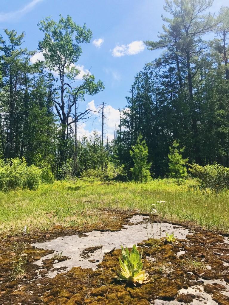 Parc provincial Burnt Lands