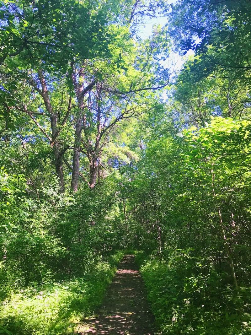 Aire de conservation Gray's Creek