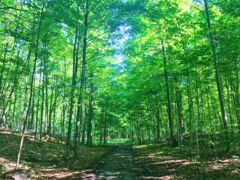 Mill Pond trails