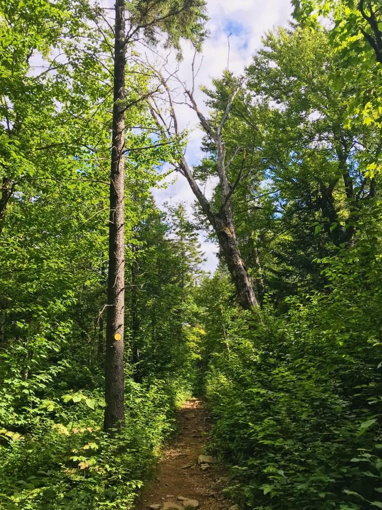 Sentier à Saint-Donat