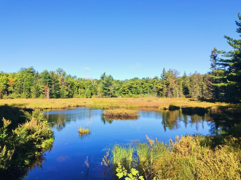 A beaver pond on Wolf Trail