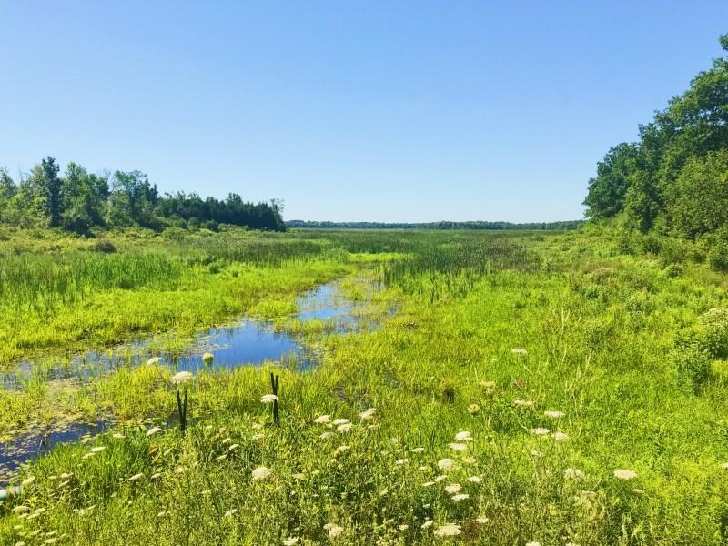 Motts Mills Conservation Area