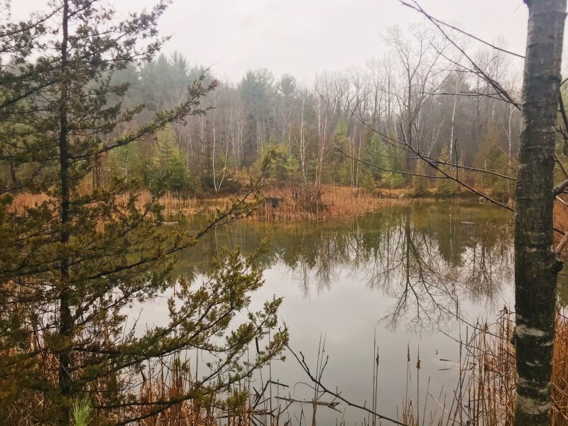 Lyn Valley Conservation Area