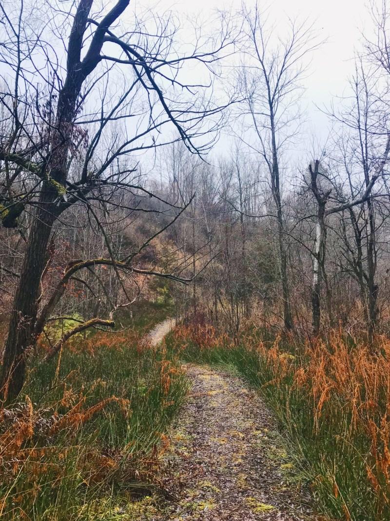 Sentier de l'aire de conservation Lyn Valley