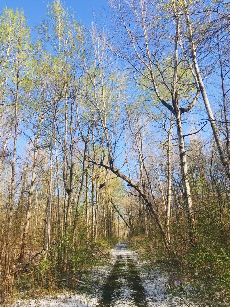 Parc provincial DuPont
