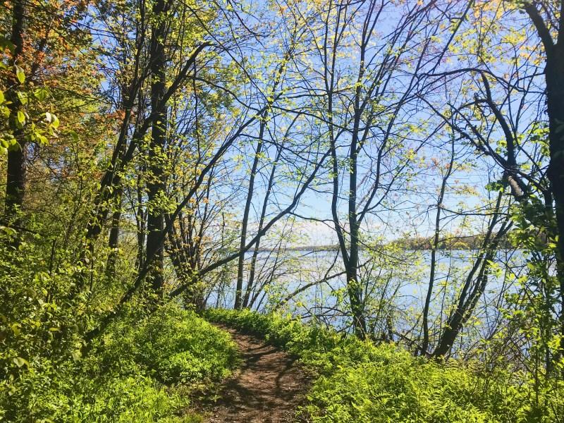 Sentier de la rive, parc provincial Rivière-Rideau