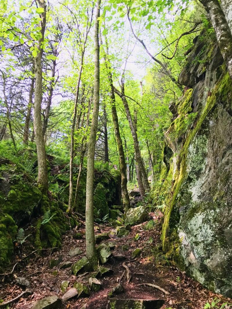 Sentier Tallow Rock Bay
