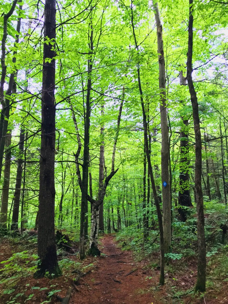 Tallow Rock Bay Trail