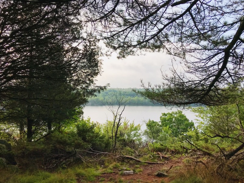 Quiddity Trail