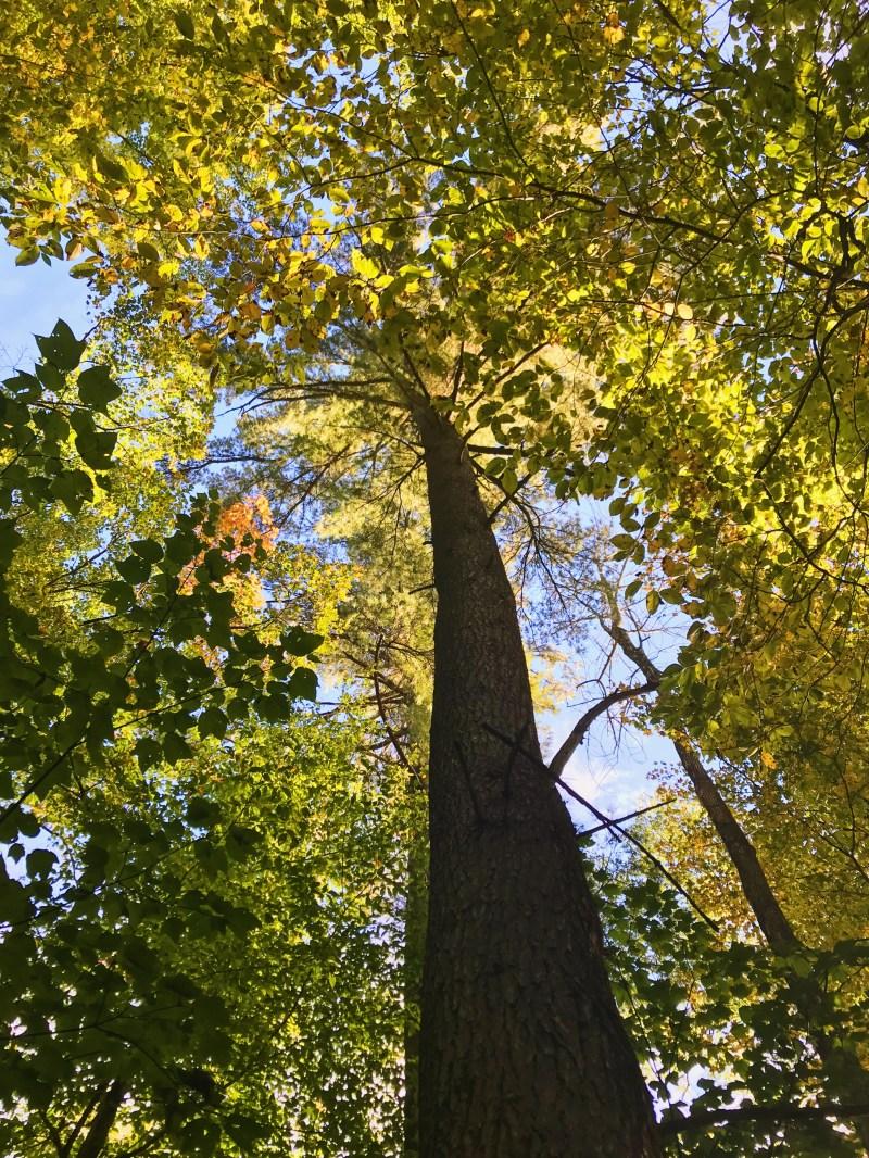 Forêt La Blanche