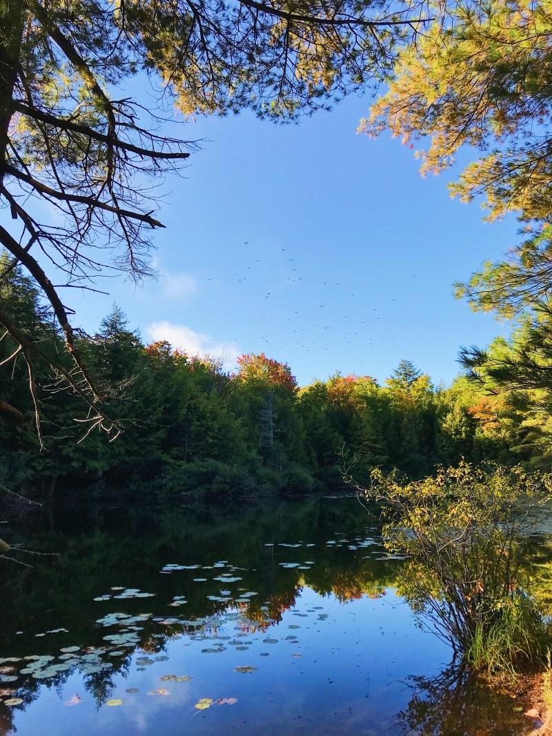 Lac Mulvihill