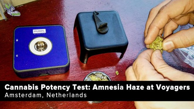 Watch this Amnesia Haze potency test at Voyagers Coffeeshop in Amsterdam on our YouTube channel.