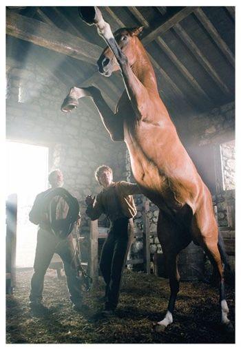 War Horse / Caballo de Batalla (2012)