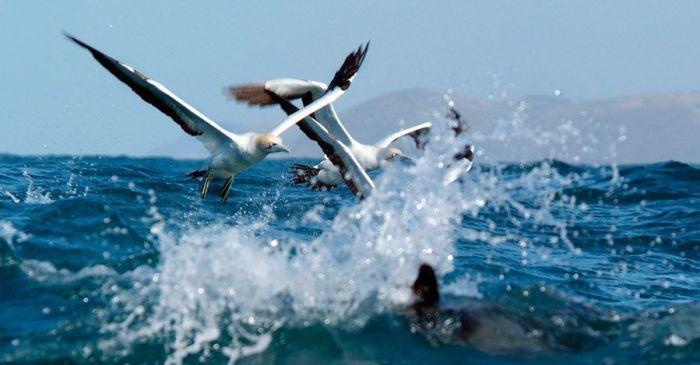 Oceano Salvaje 3D (2010)