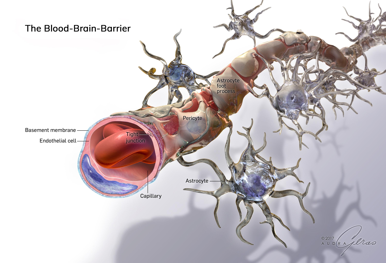 skin cross section diagram directv deca adapter illustration gallery - geras healthcare productions