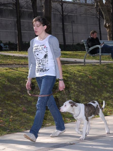 Mon Chien Tire En Laisse : chien, laisse, Chien, Laisse, Apprendre, Facilement, Tirer